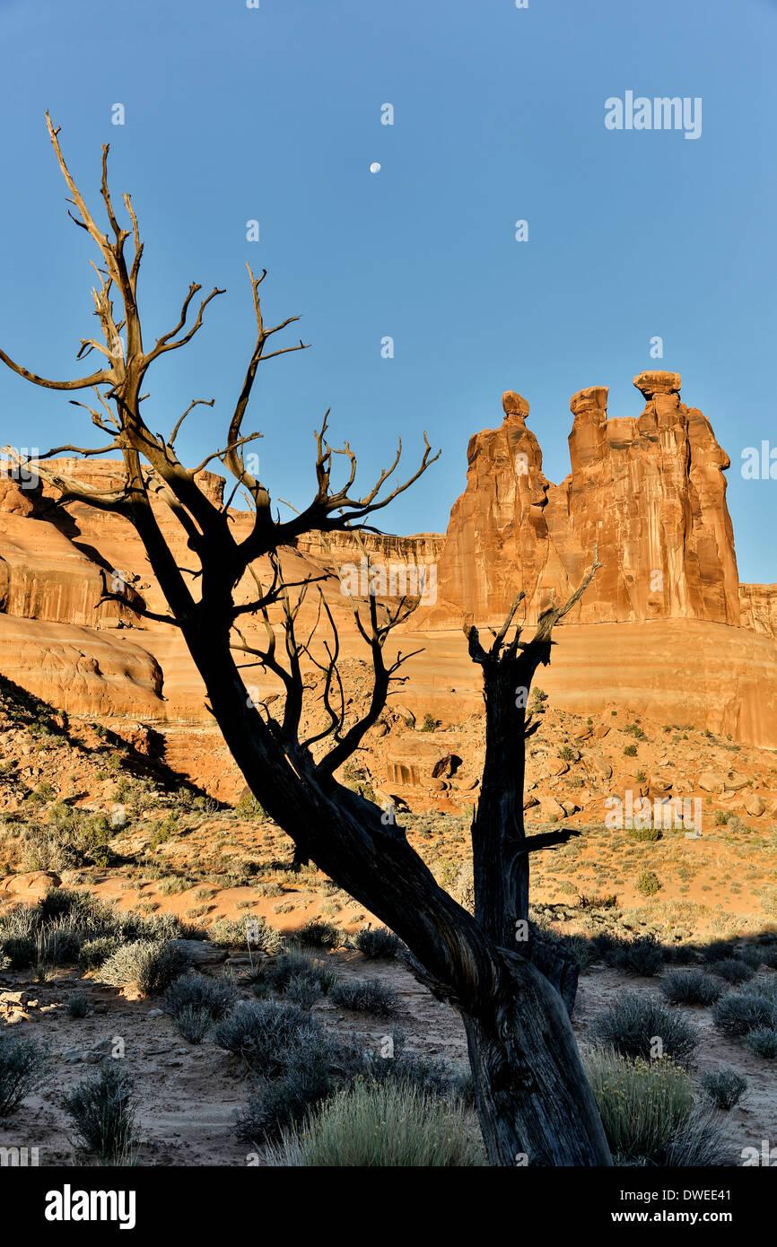 Baum, Mond und die Drei Klatschbasen, Arches National Park, Moab, Utah USA Stockbild