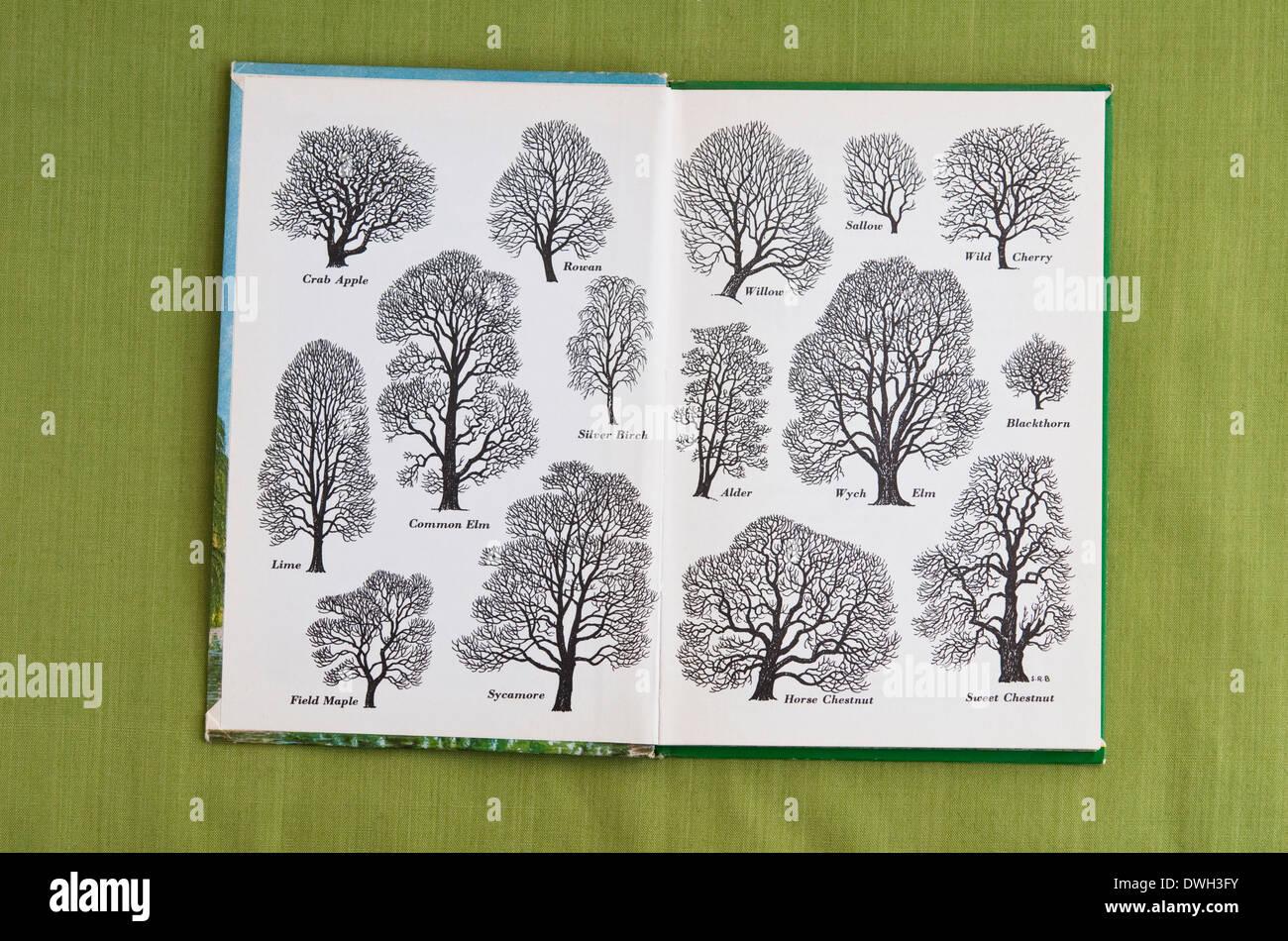 """Umrisse von Bäumen Titelseite wie Tinte gezeichnet von S R Badmin - gedruckt auf der Innenseite """"Bäume"""" ein 1963-Marienkäfer-Buch. VEREINIGTES KÖNIGREICH. Stockbild"""