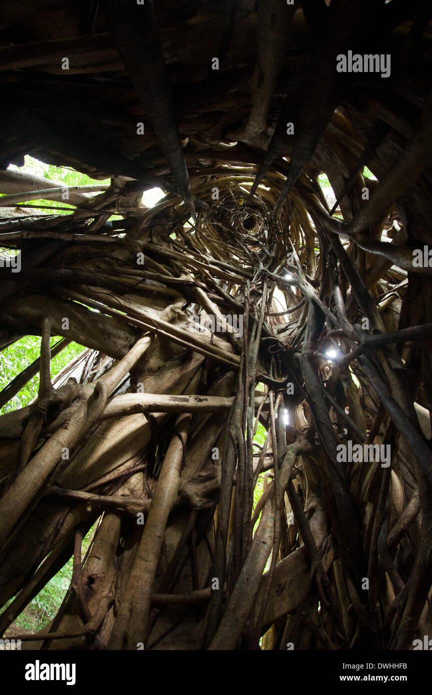 Tangkoko wald nord sulawesi indonesien 9 m rz 2014 tangkoko ist einer der letzten verbliebenen hochburgen des kritisch gef hrdete sulawesi crested