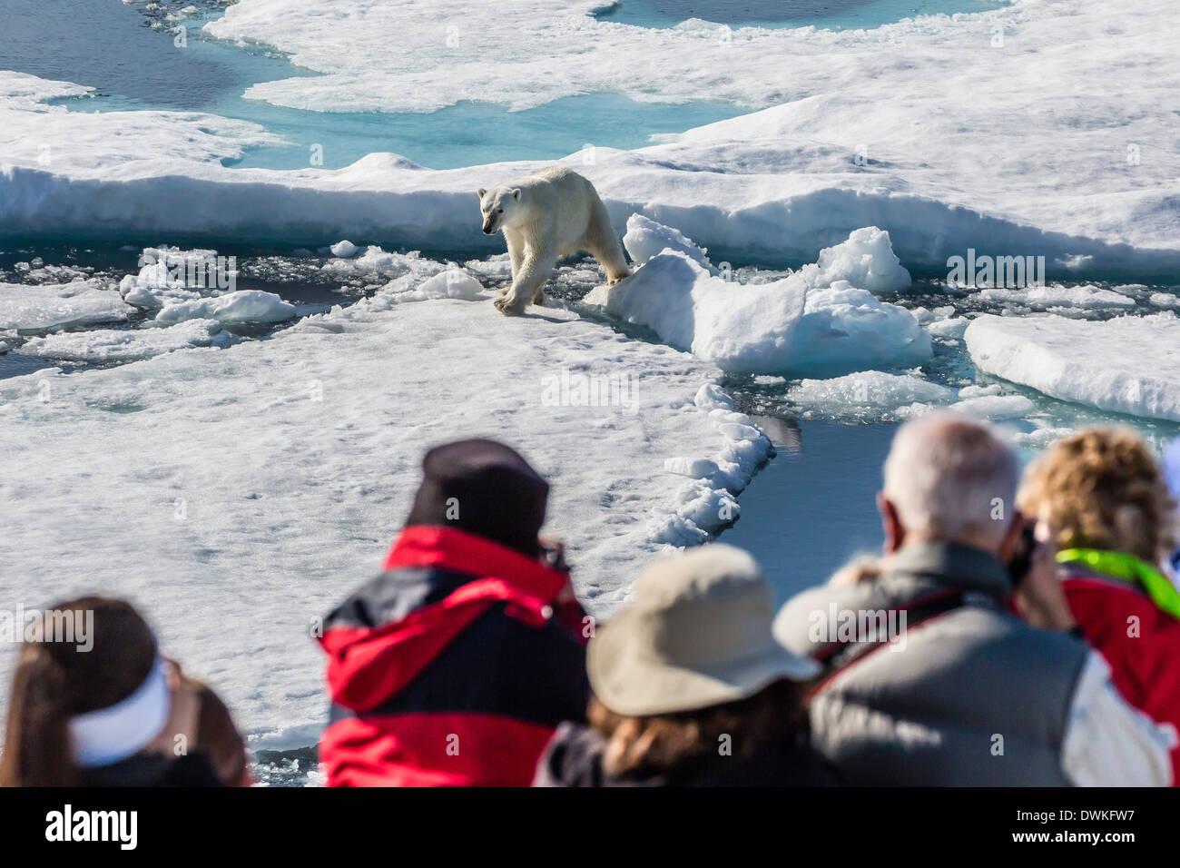 Gäste aus der Lindblad Expedition im Lieferumfang von Eisbär (Ursus Maritimus), Cumberland Halbinsel, Baffininsel, Nunavut, Kanada Stockbild