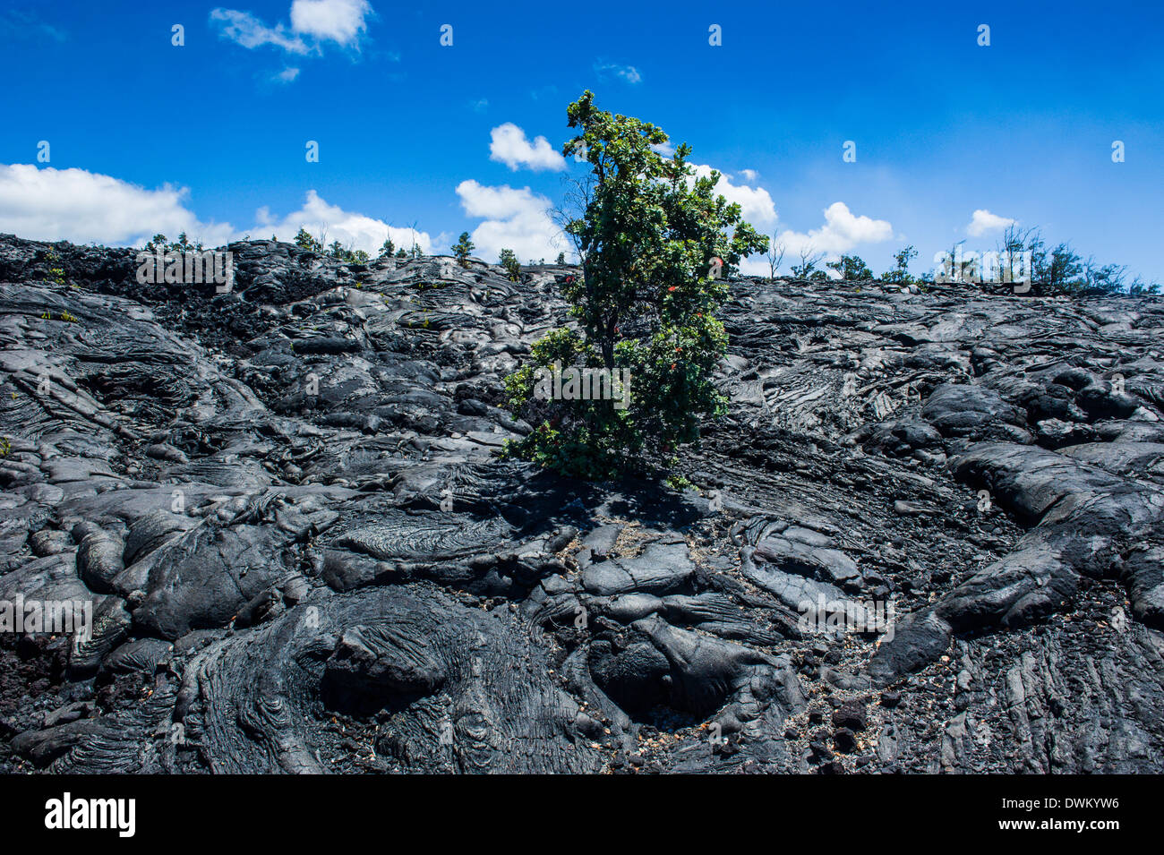 Vulkanischer Lava Stream im Hawaii Volcanoes National Park, UNESCO-Weltkulturerbe, Big Island, Hawaii, Pazifik Stockbild