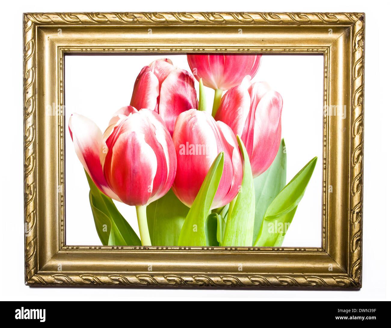 Tulpen in alten Gemälde Rahmen Stockfoto, Bild: 67461115 - Alamy