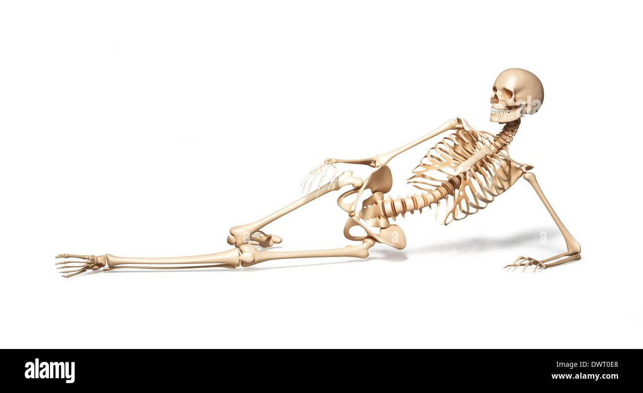 Female Skeletal Structure Stockfotos & Female Skeletal Structure ...