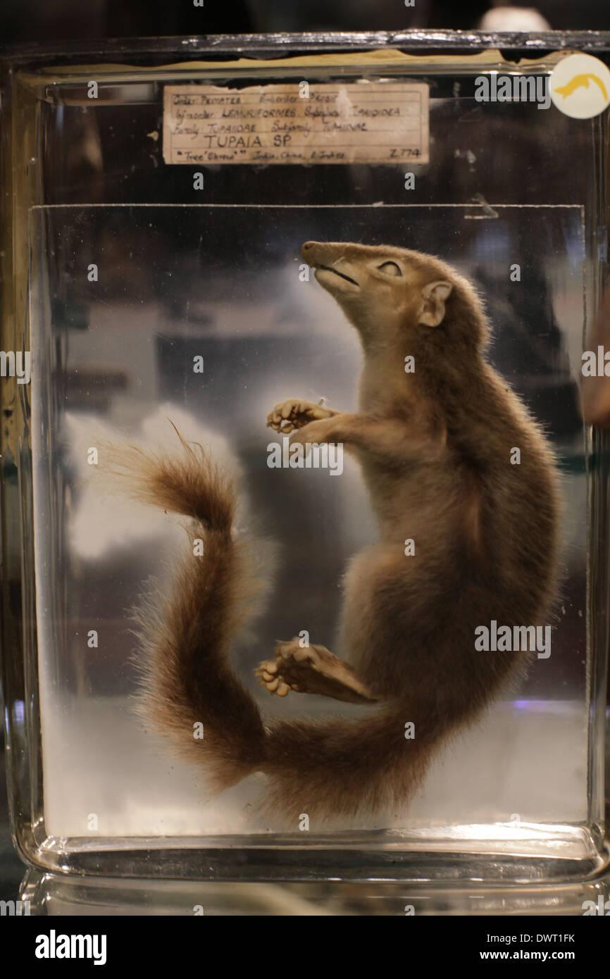 Grant Museum für Zoologie und vergleichende Anatomie, University ...