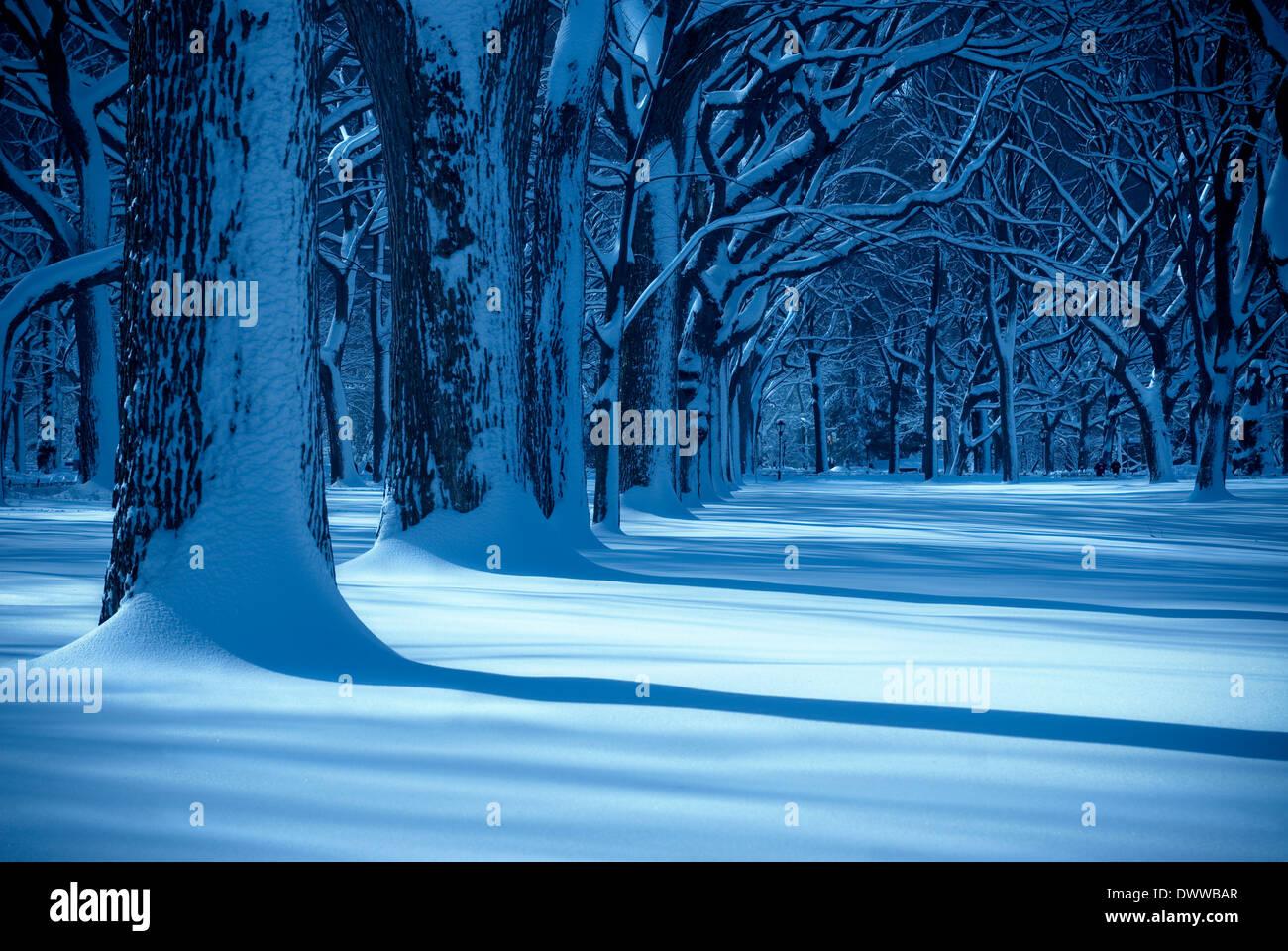 Geheimnisvolle Landschaft mit Sonnenstrahl auf einem schneebedeckten Feld mit Bäume und Schatten. Stockbild
