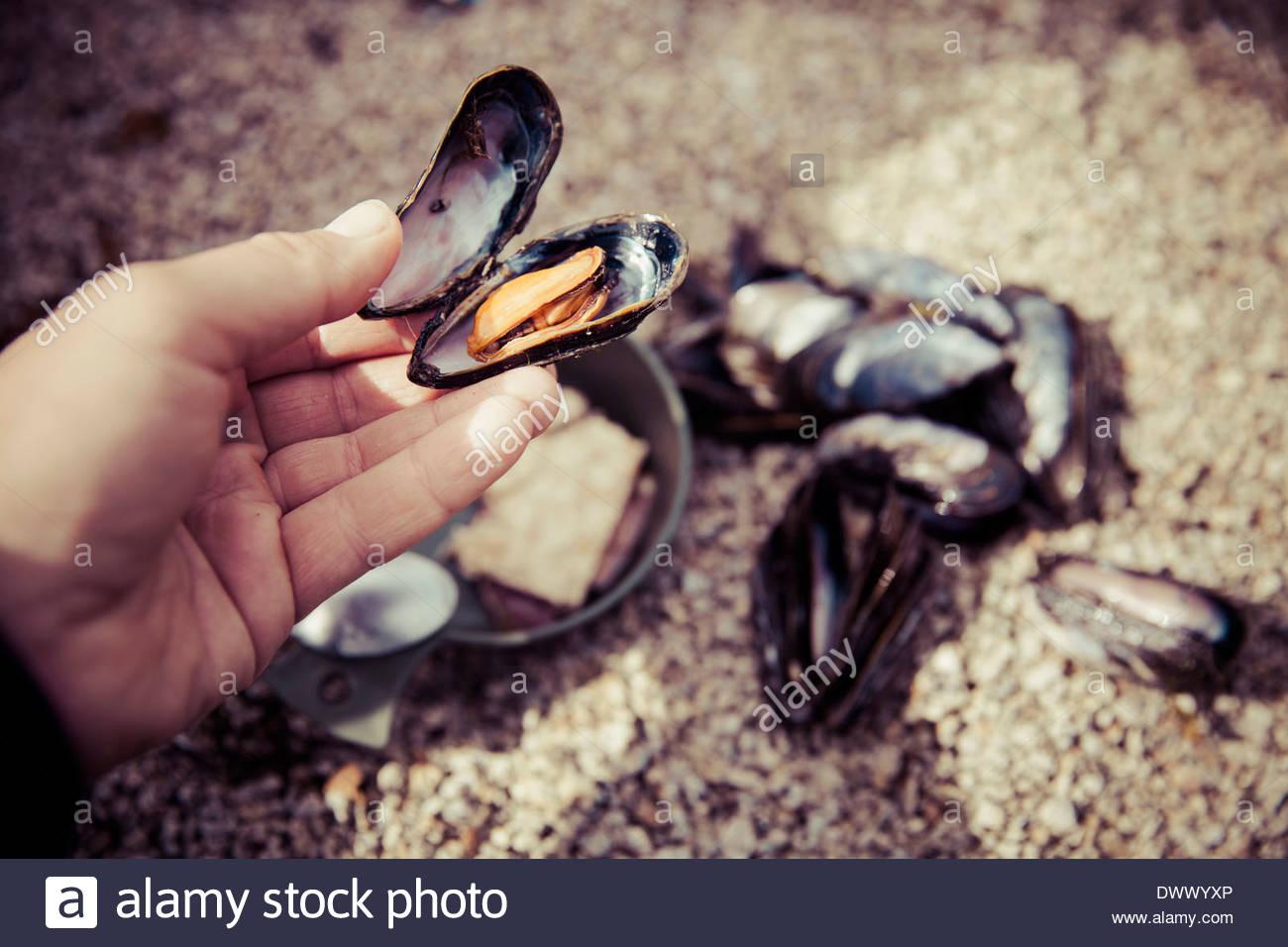 mussel shell seashore beach stockfotos mussel shell. Black Bedroom Furniture Sets. Home Design Ideas