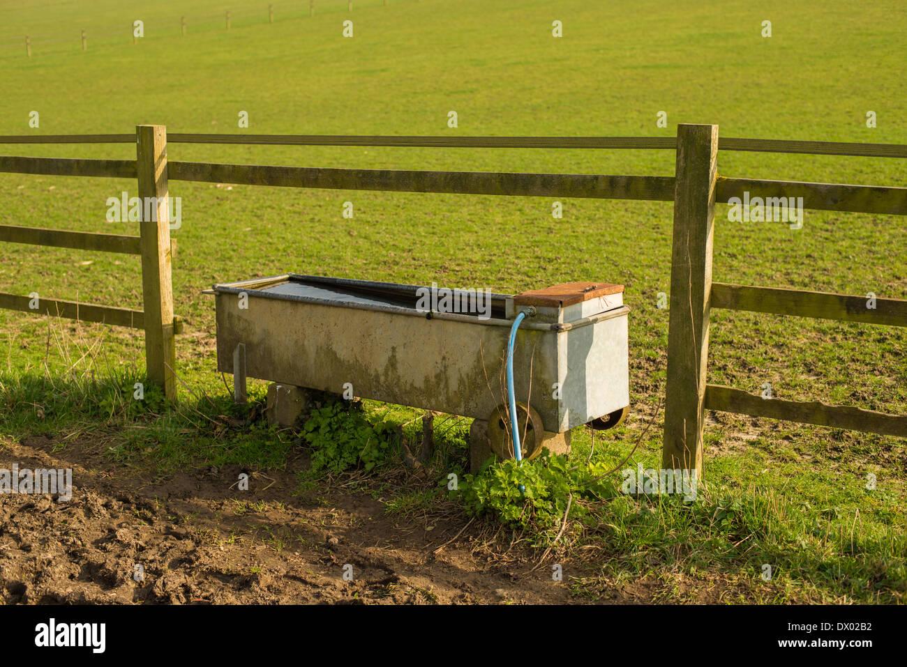 Rinder, die Tränke an der Seite eines Feldes in Hertfordshire ...