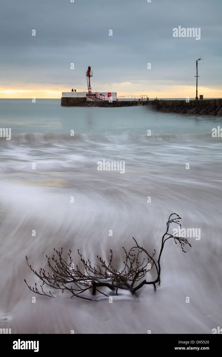 Ein Zweig am Strand von Looe in Cornwall bei Sonnenaufgang mit einer langen Belichtungszeit aufgenommen Stockbild