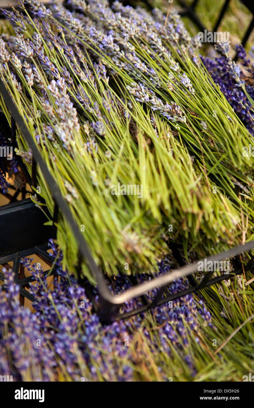 Getrockneten Lavendel in Kisten, erhöhte Ansicht, Nahaufnahme Stockbild