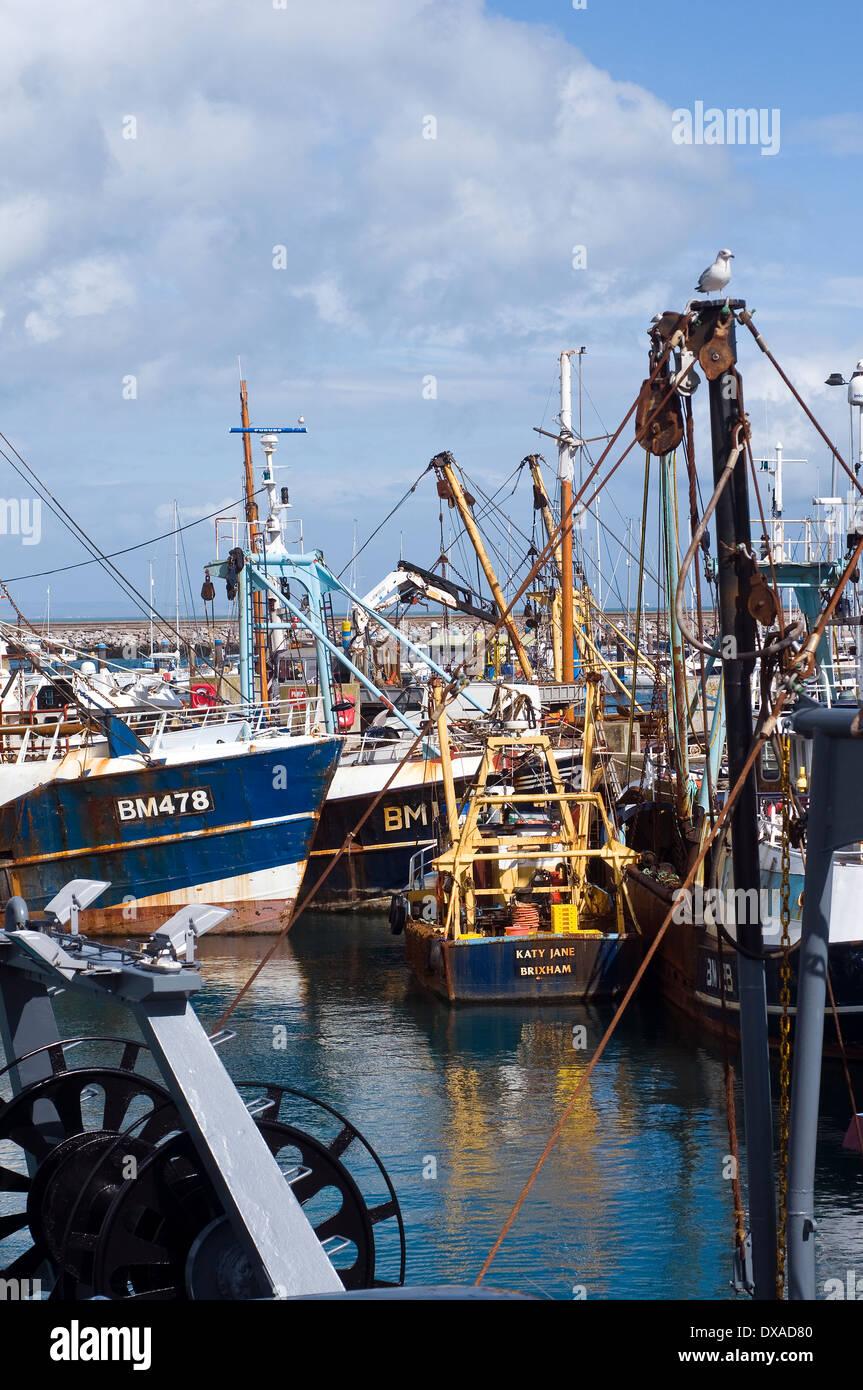 Brixham Fischereiflotte, bm 478, halten klaren foul Liegeplatz, foul Liegeplatz, Mast, Masten, Freizeit, Nautik, Seemann, Ma, Falle, Stockbild