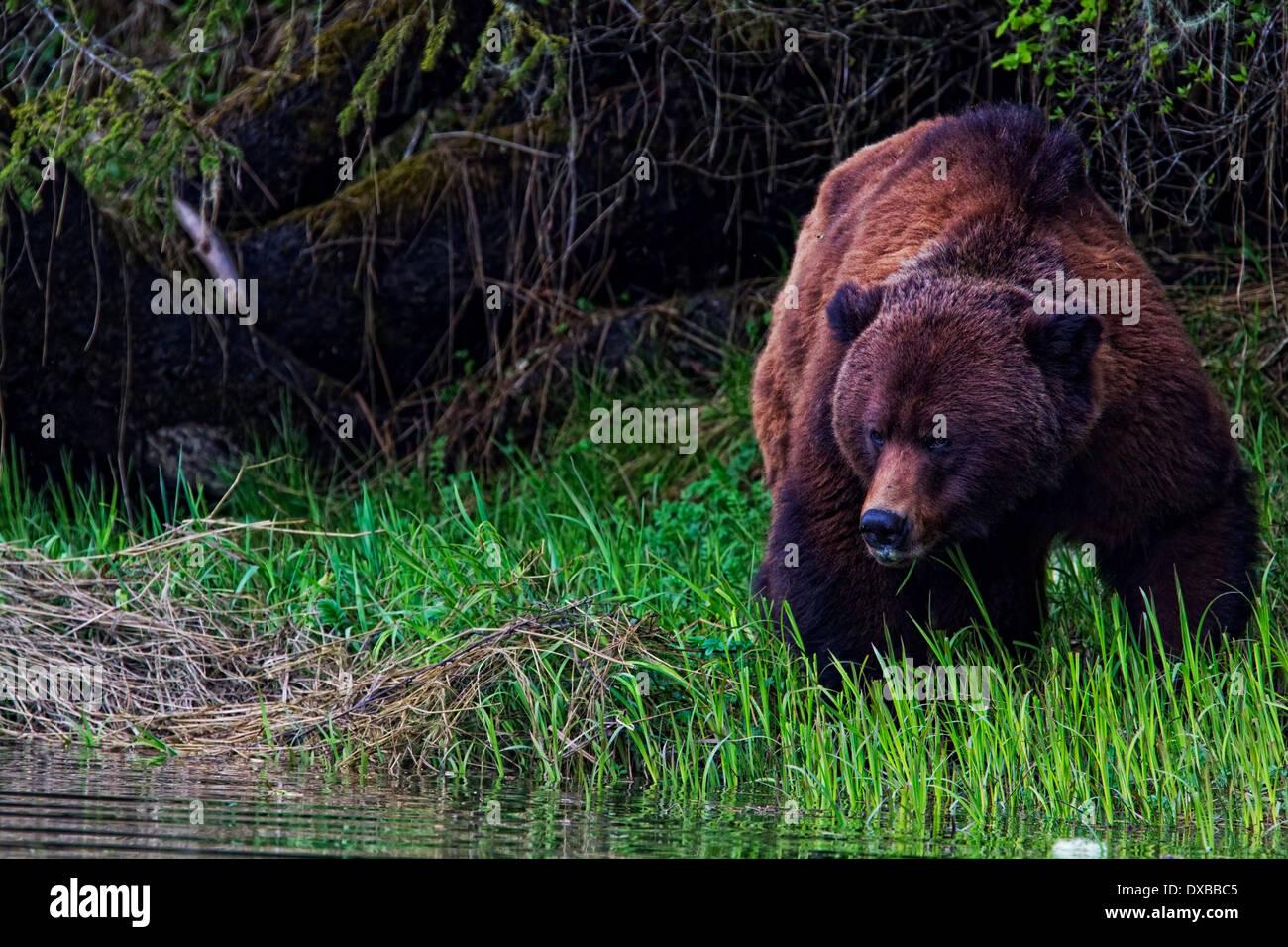 Wunderbar Laubwald Tiere Färbung Seiten Fotos - Malvorlagen Von ...