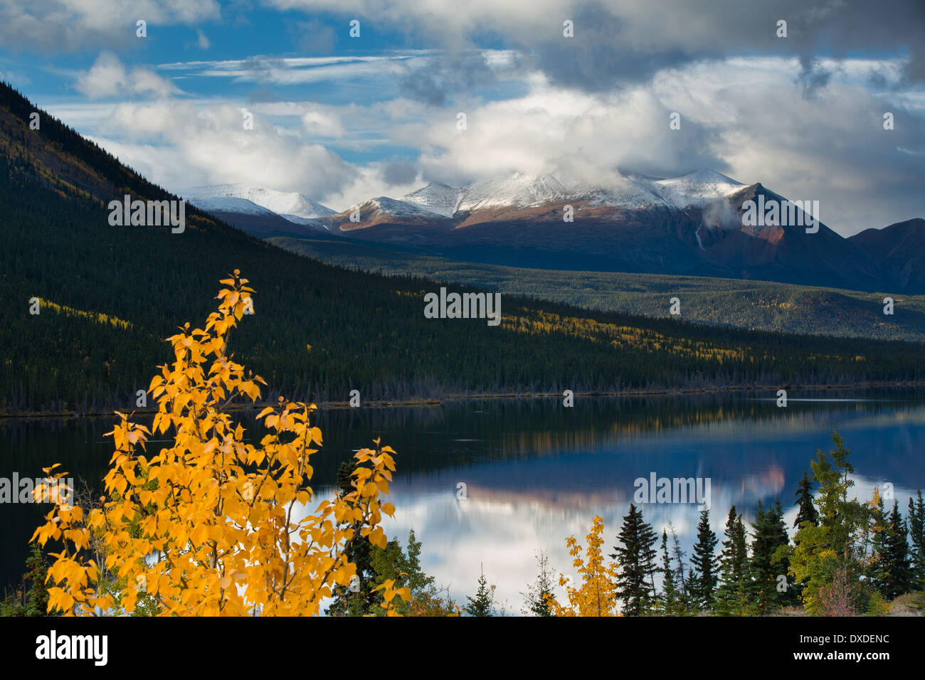 Herbstfärbung bei Nares Lake mit Montana Berg darüber hinaus, in der Nähe von Carcross, Yukon Territorien, Kanada Stockbild
