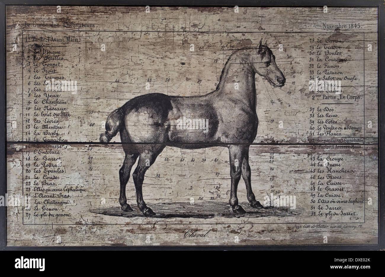 Anatomy Horse Animal Illustration Stockfotos & Anatomy Horse Animal ...