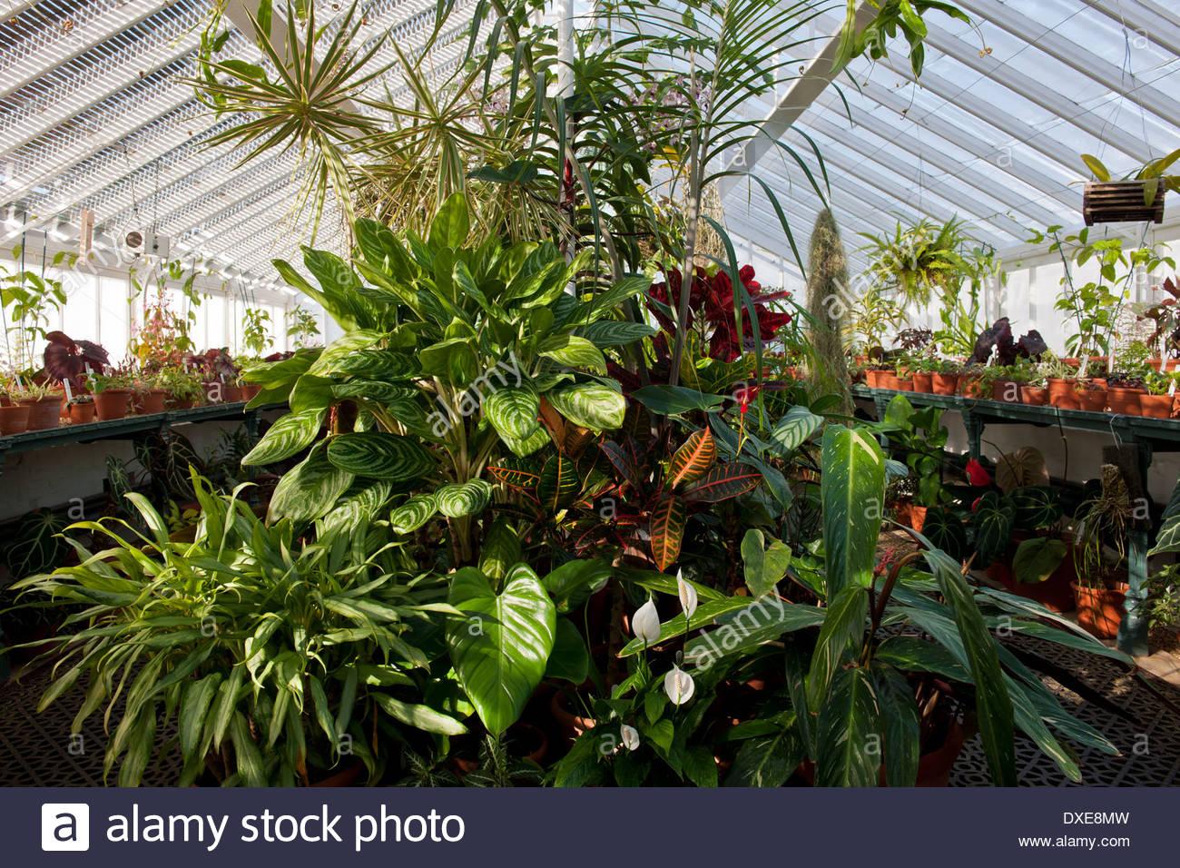 Zarte Pflanzen Gewachshaus Gewachshaus Regal Topfe Behalter Fruhling