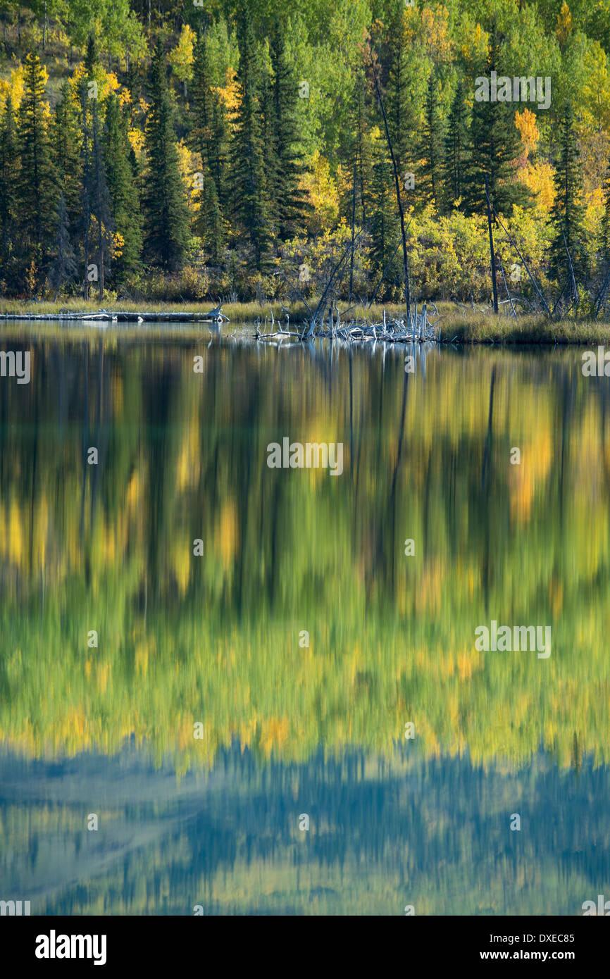 Herbstfärbung nr Pelly Crossing, Yukon Territorien, Kanada Stockbild