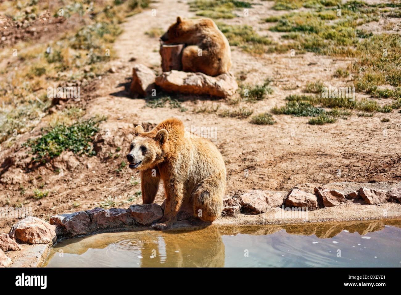 Bären im zoo Stockbild