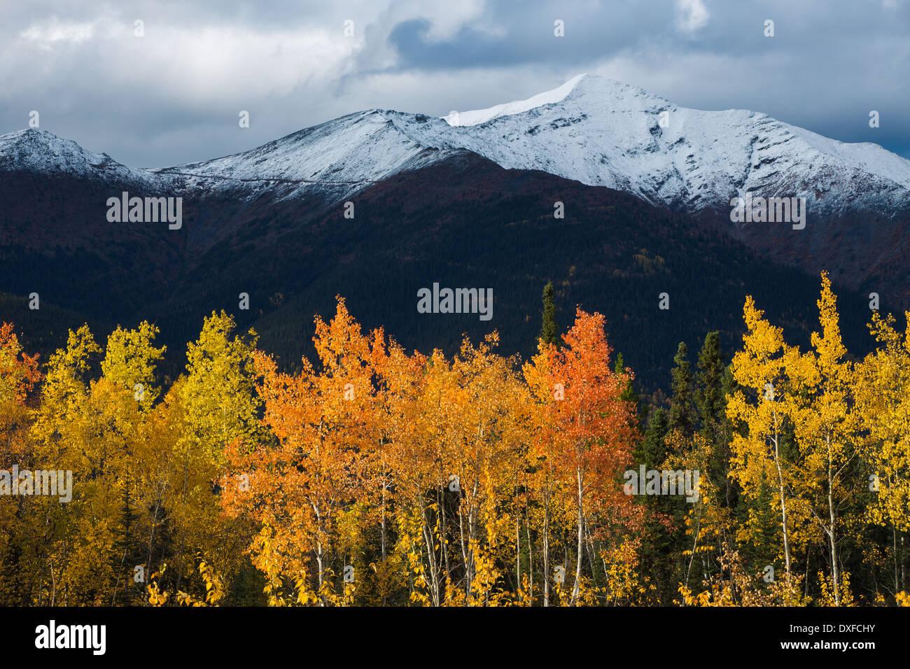 Herbstfärbung des borealen Waldes im Tal Stewart River, Yukon Territorien, Kanada Stockfoto