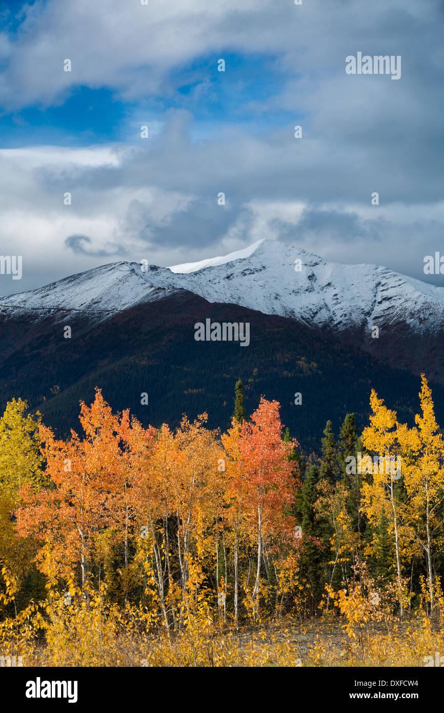 Herbstfärbung des borealen Waldes im Tal Stewart River, Yukon Territorien, Kanada Stockbild