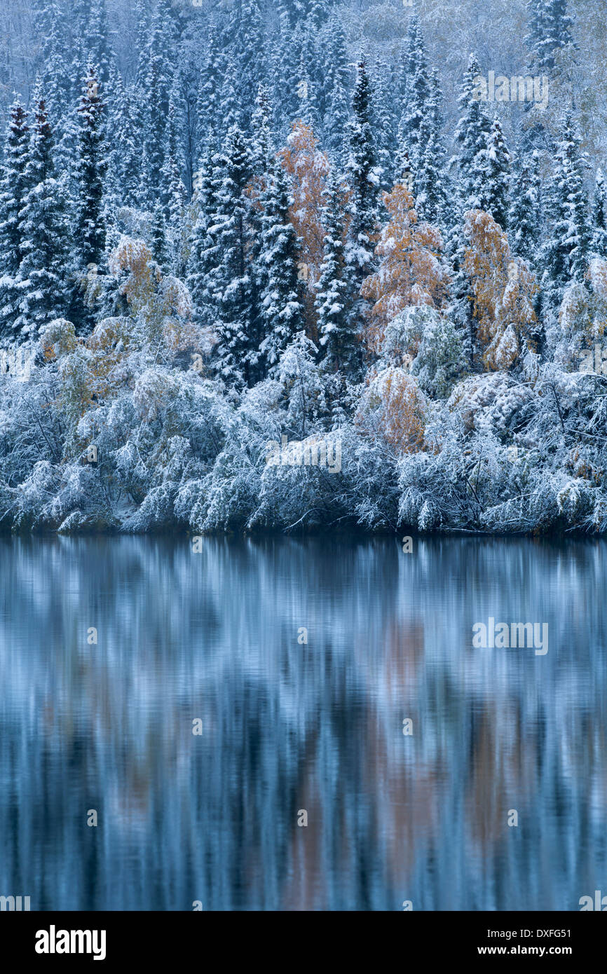 Herbstfärbung und der erste Schneefall an fünf Meile See. Silver Trail, Yukon Territorien, Kanada Stockbild