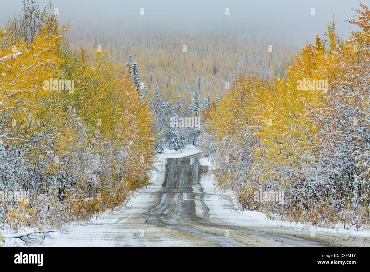 Herbstfärbung und der erste Schnee auf der Straße nach Keno, Silver Trail, Yukon Territorien, Kanada Stockbild