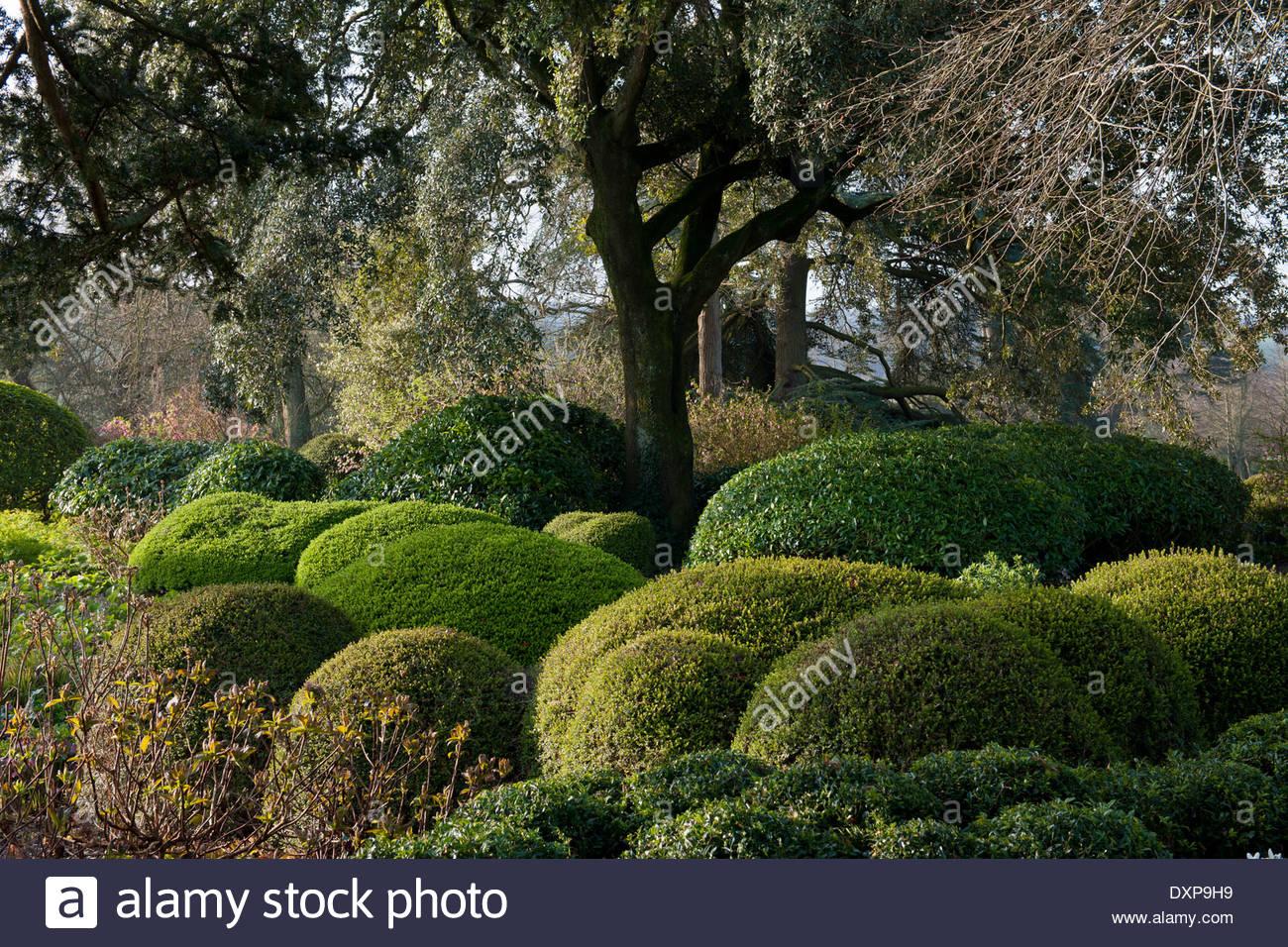 shrubs stockfotos shrubs bilder alamy. Black Bedroom Furniture Sets. Home Design Ideas