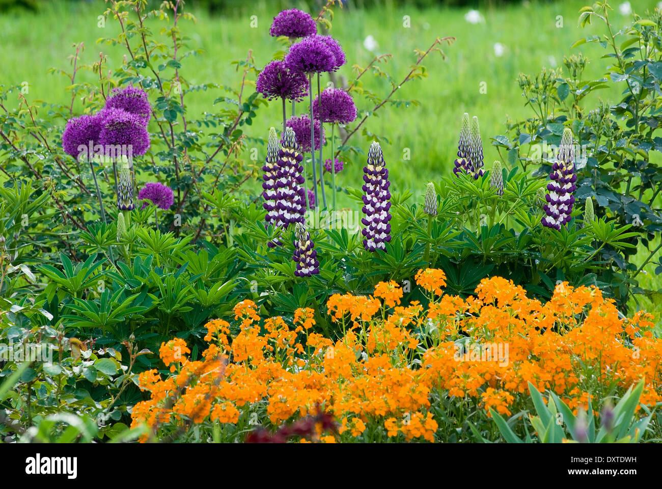 Frühlingsgrenze Stockfotos & Frühlingsgrenze Bilder