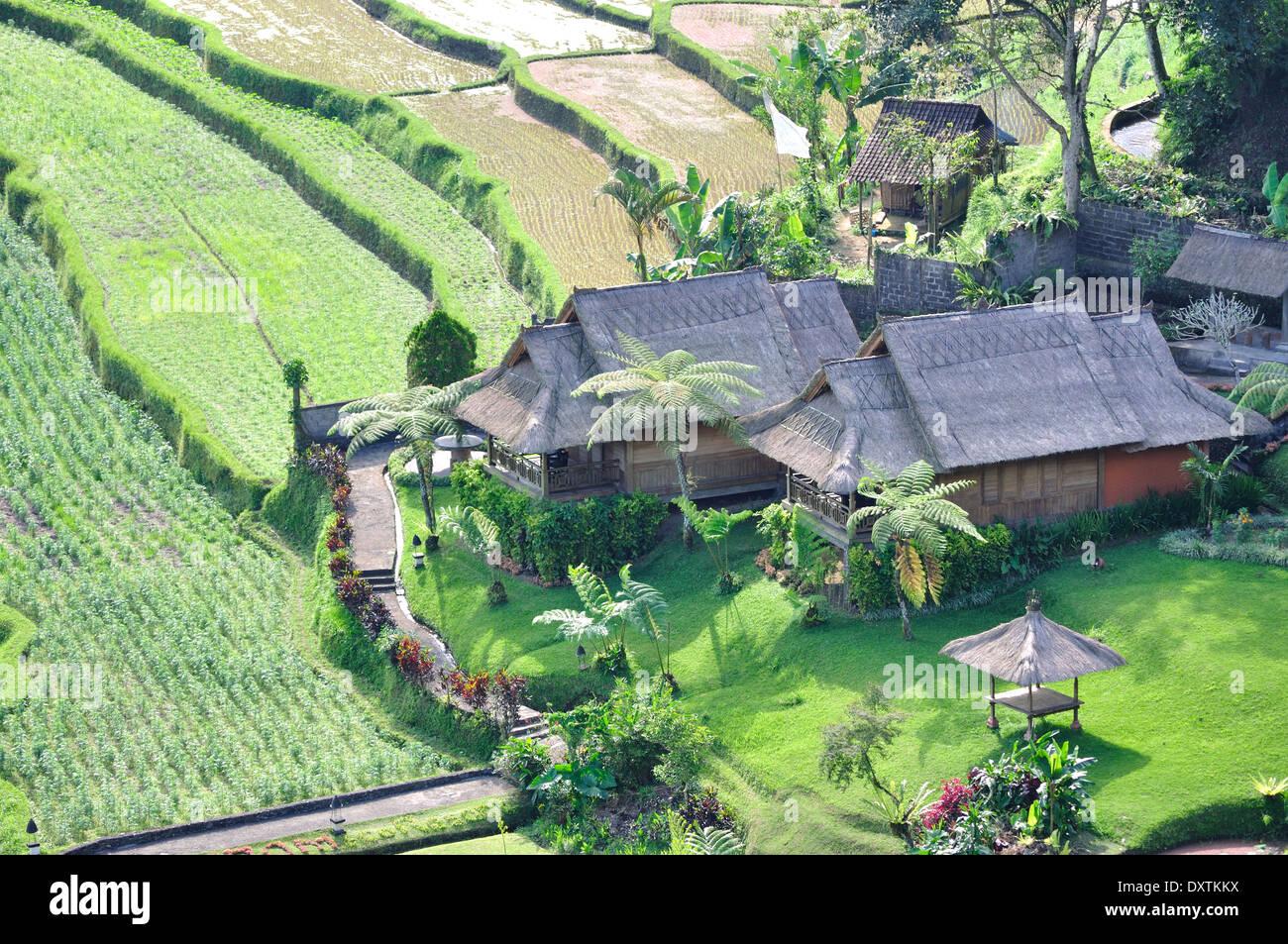 Traditionelles Dorf mit Reisfeld in Insel Bali, Indonesien. Stockbild