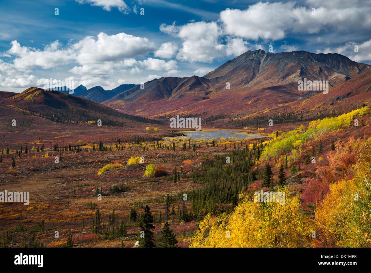 Herbstfärbung und Cathedral Mountain, Tombstone Territorial Park, Yukon Territorien, Kanada Stockbild