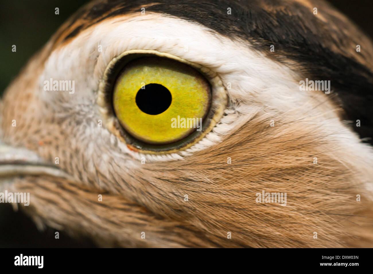 Nett Vogel Auge Anatomie Bilder - Menschliche Anatomie Bilder ...