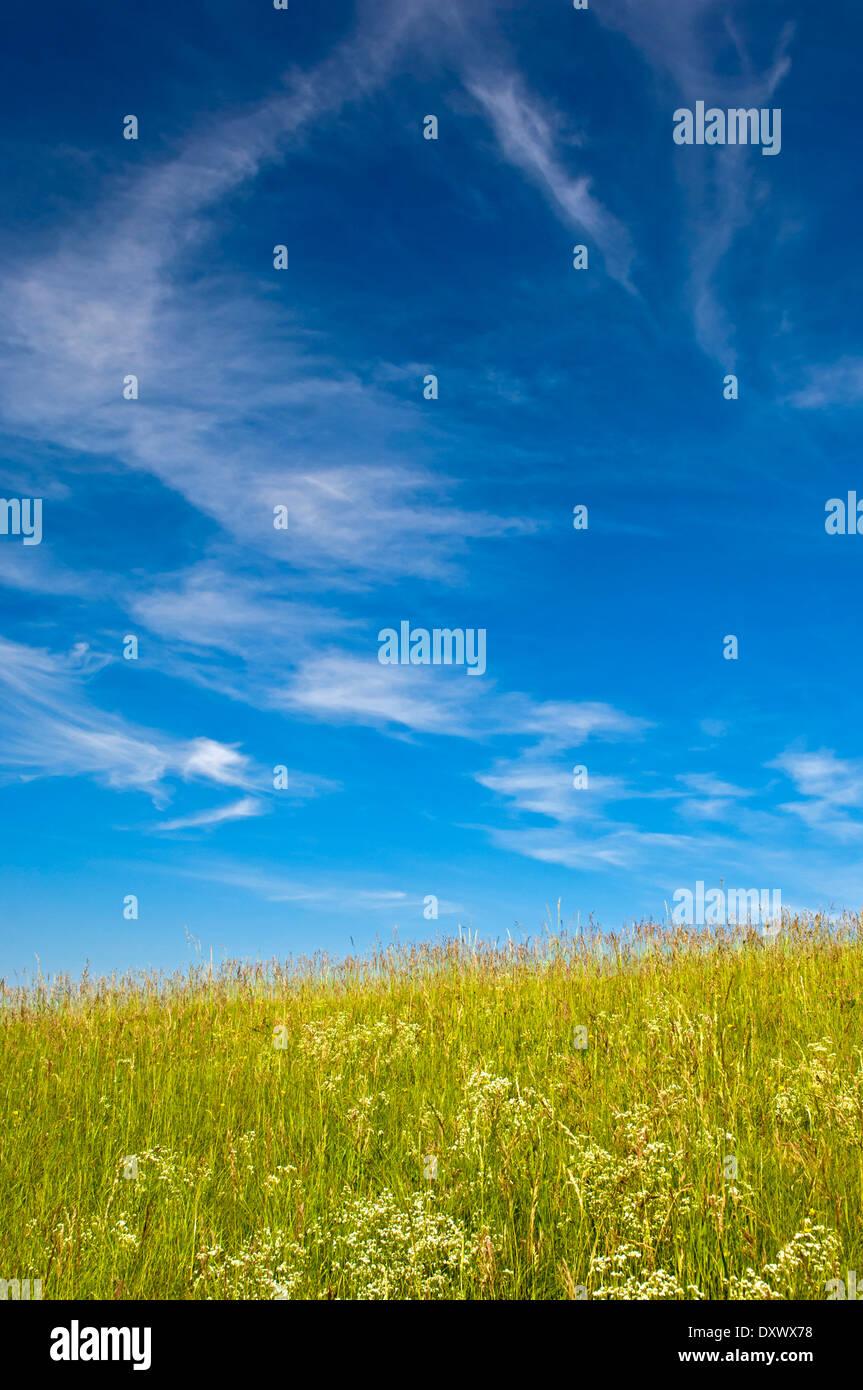 Blauer Himmel mit Cirruswolken über einer Sommerwiese, Baden-Württemberg, Deutschland Stockbild