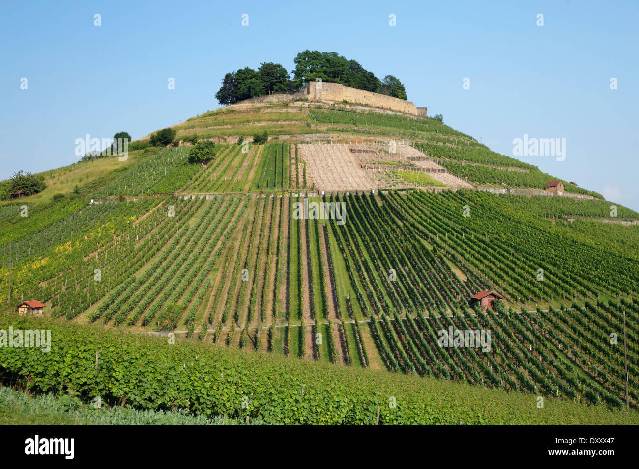 "Deutschland, Weinberg, Burg Ruinen ""Weibertreu"", Deutschland, Baden-Württemberg, Weinsberg, Burgruine ""Weibertreu"" Stockbild"