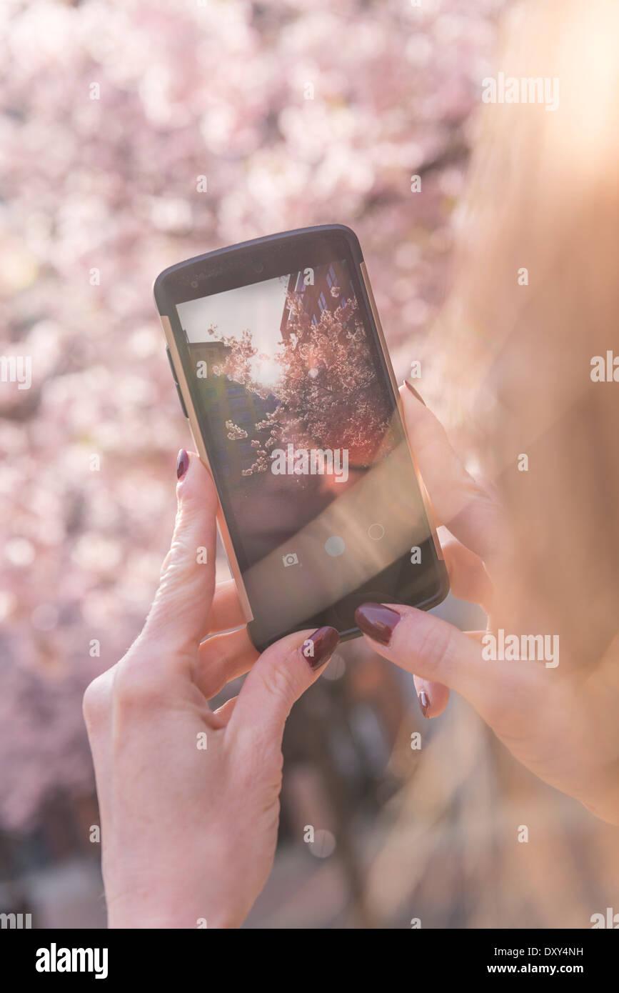 Frau, die ein Foto auf ihr Handy von Cherry Blossom Stockbild