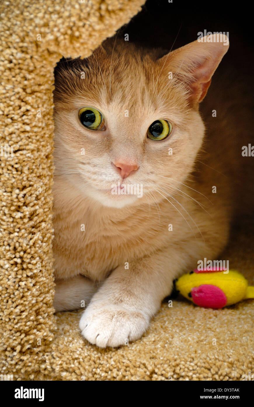Katze Wohnung Stockfotos Katze Wohnung Bilder Alamy