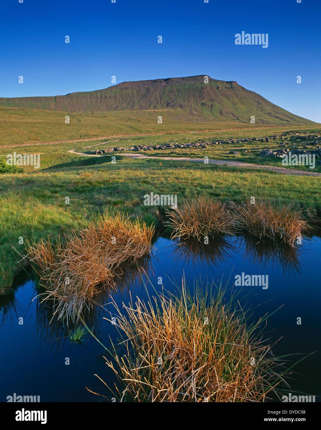 Ingleborough betrachtet von Southerscales Nature Reserve. Stockbild