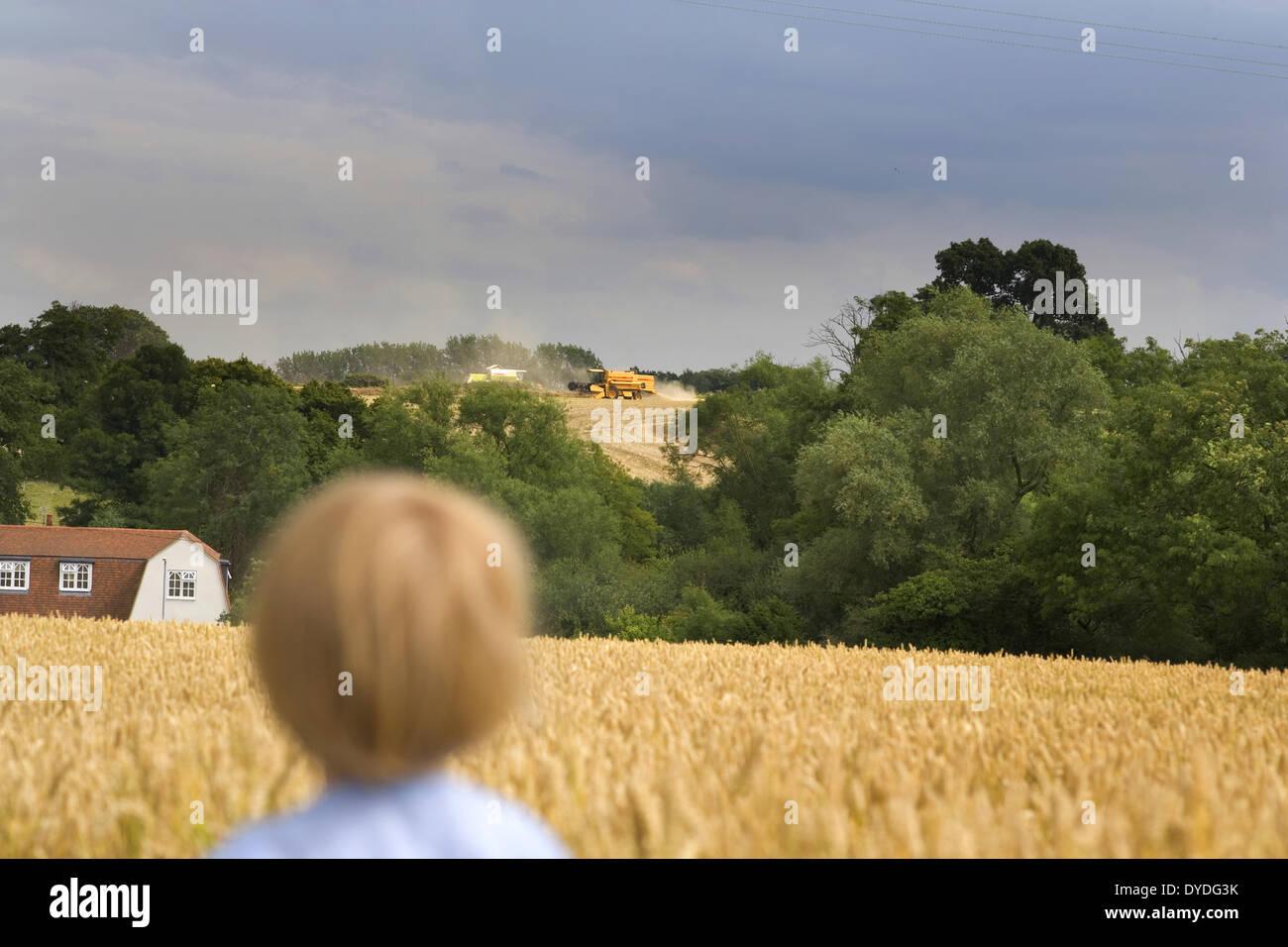 Ein kleiner Junge beobachtet den Mähdrescher in einem Weizenfeld im August. Stockbild