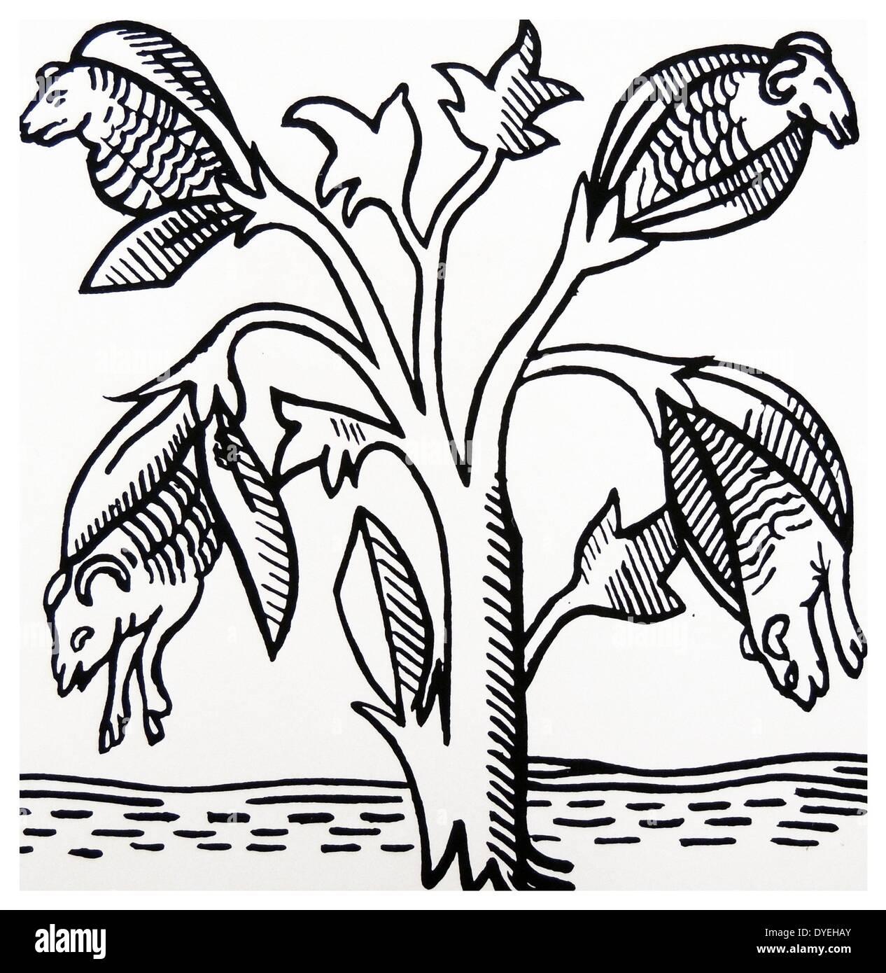 Variation der Weißwangengans Legende Stockbild
