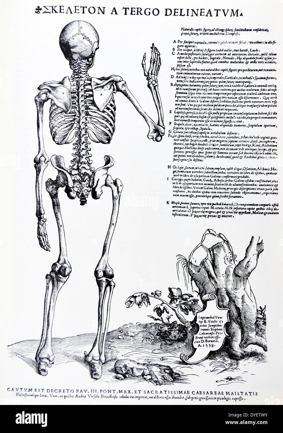 Berühmt Anatomie In Der Renaissance Zeitgenössisch - Anatomie Von ...