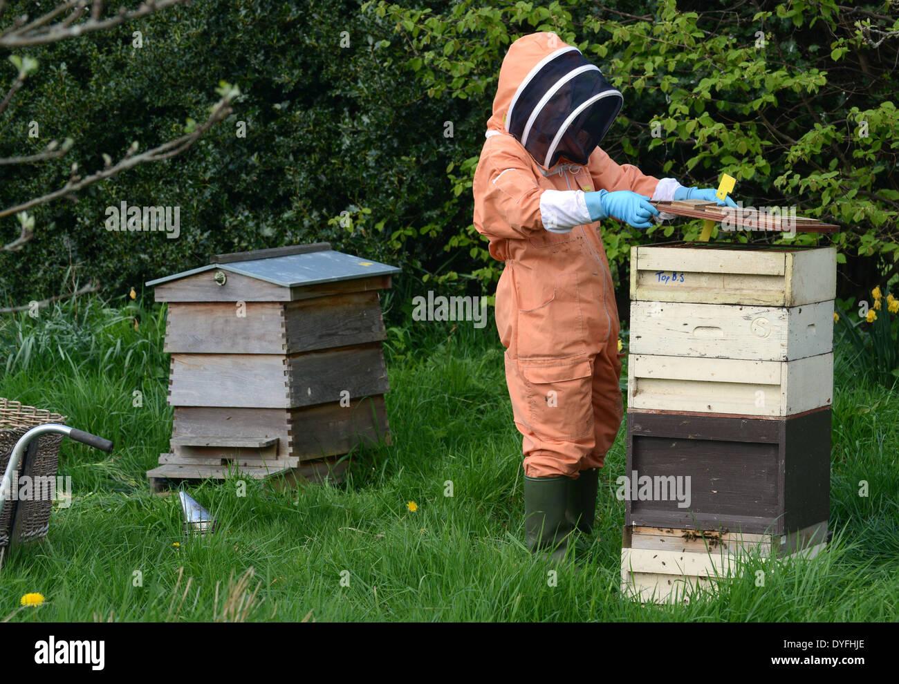 National Trust Bee Keeper halten Honig Bienen Bienenstock Uk Stockfoto