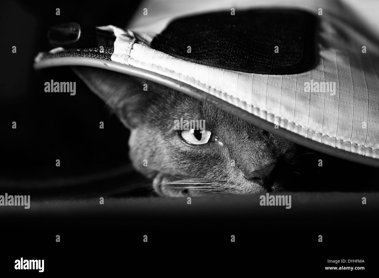 Eine graue Katze, versteckt unter einer Tasche Stockfoto