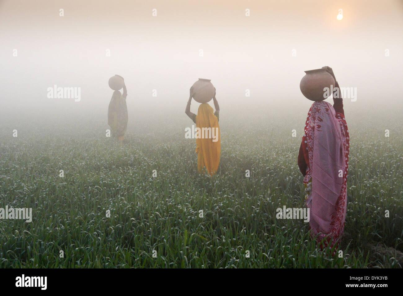 Frauen mit Krügen Wasser auf Kopf, ein Spaziergang durch Reisfelder bei Sonnenaufgang an einem nebligen Morgen, Indien Stockbild