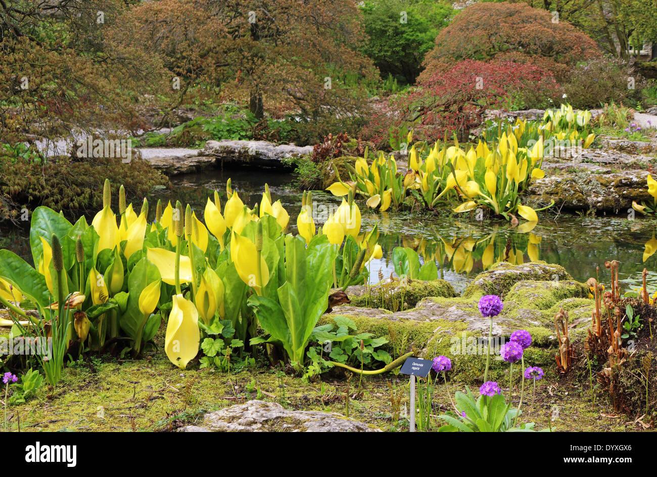 Garten Steingarten Mit Teich Stockfotos Garten Steingarten Mit