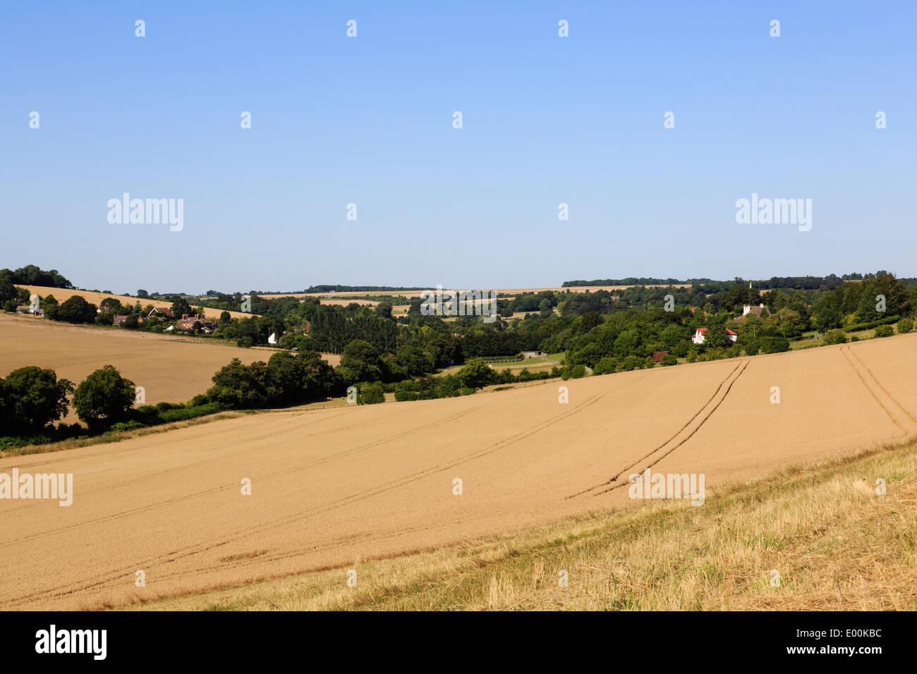 Blick gegen unten in North Downs mit Reife Getreide ernten im Sommer erntereif. Elham Tal Barham Kent England UK Großbritannien Stockbild