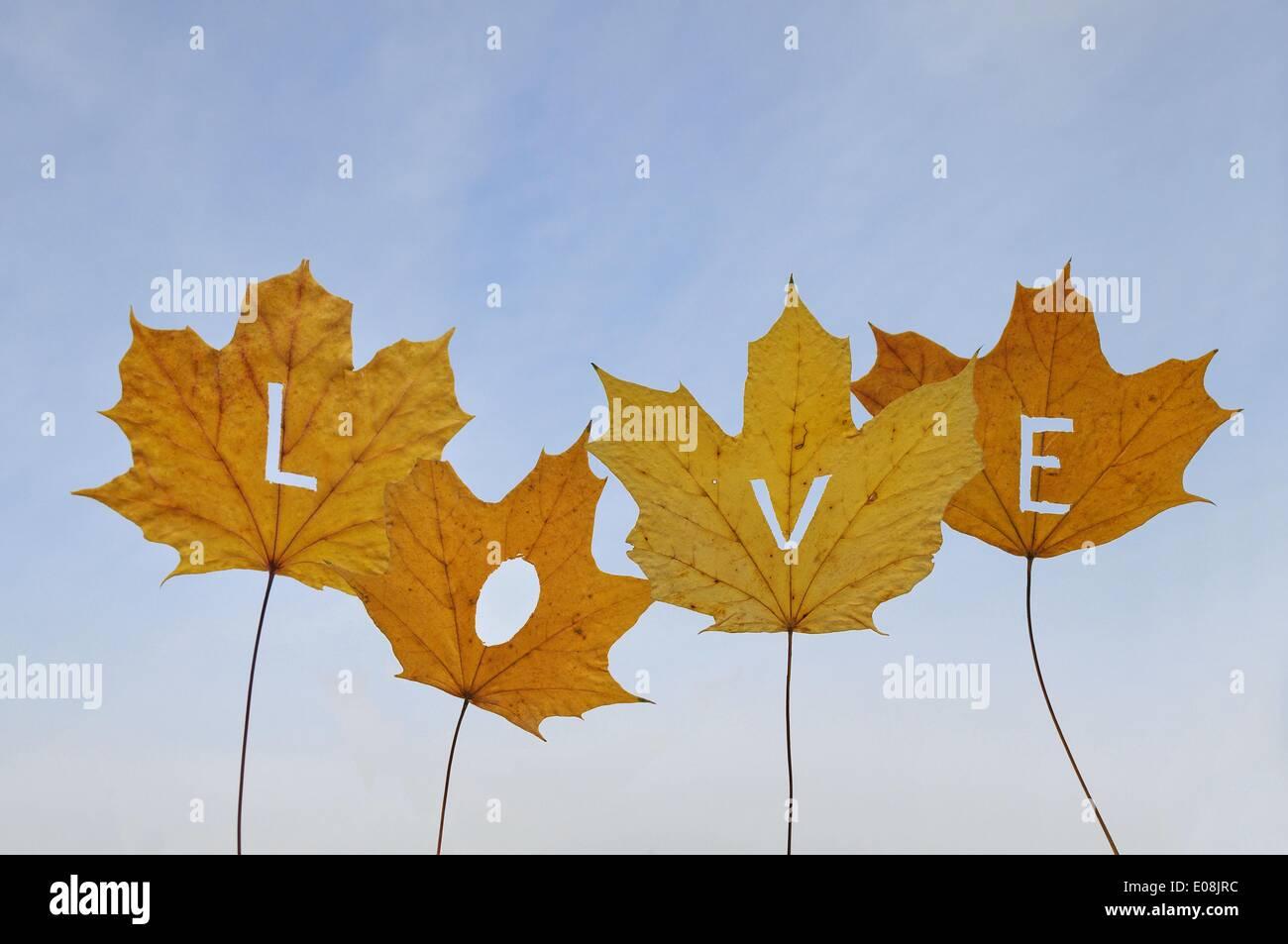 Briefe aus ausgeschnitten herbstliche farbige Blätter Form das Wort ...