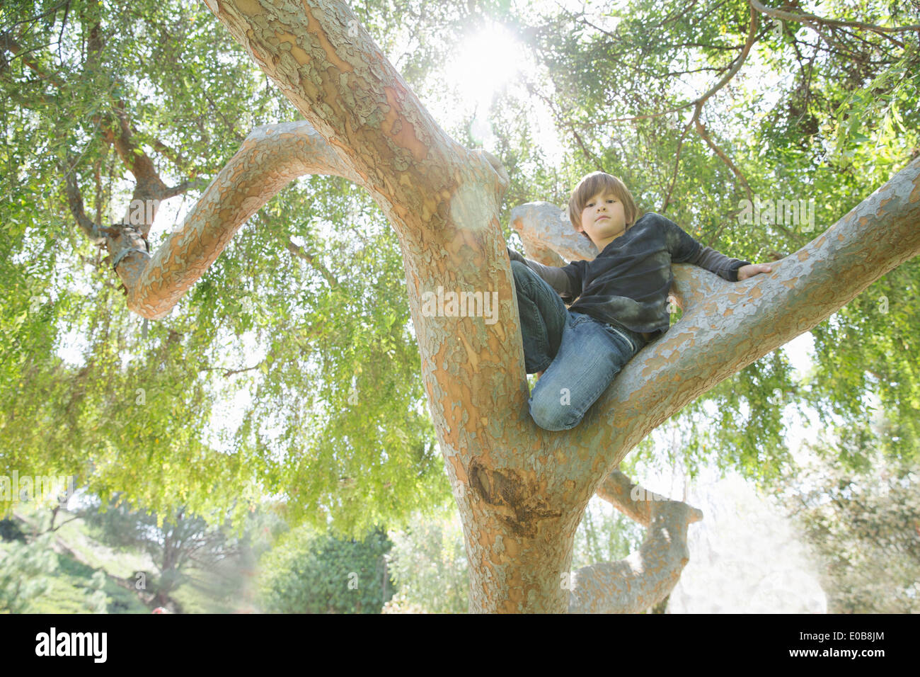 Junge im Baum versteckt und auf der Suche nach unten Stockbild