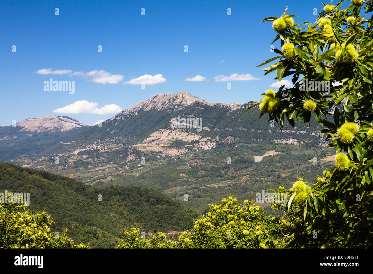 Bergpanorama mit Kastanien-Baum, Castanea Sativa, Cilento Nationalpark Cilento, Kampanien, Süditalien, Europa Stockbild