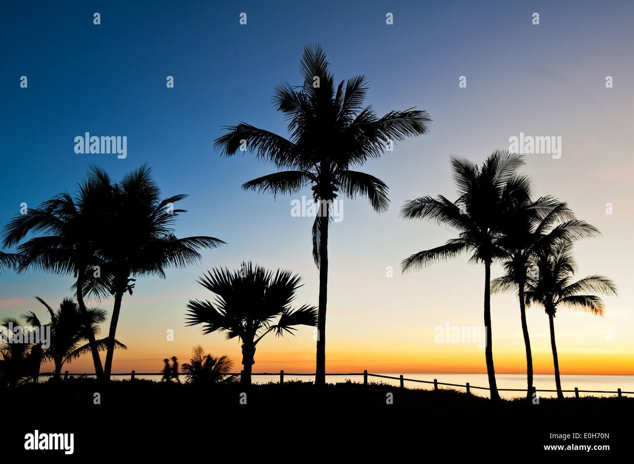 Palmen am Cable Beach in Broome. Stockbild