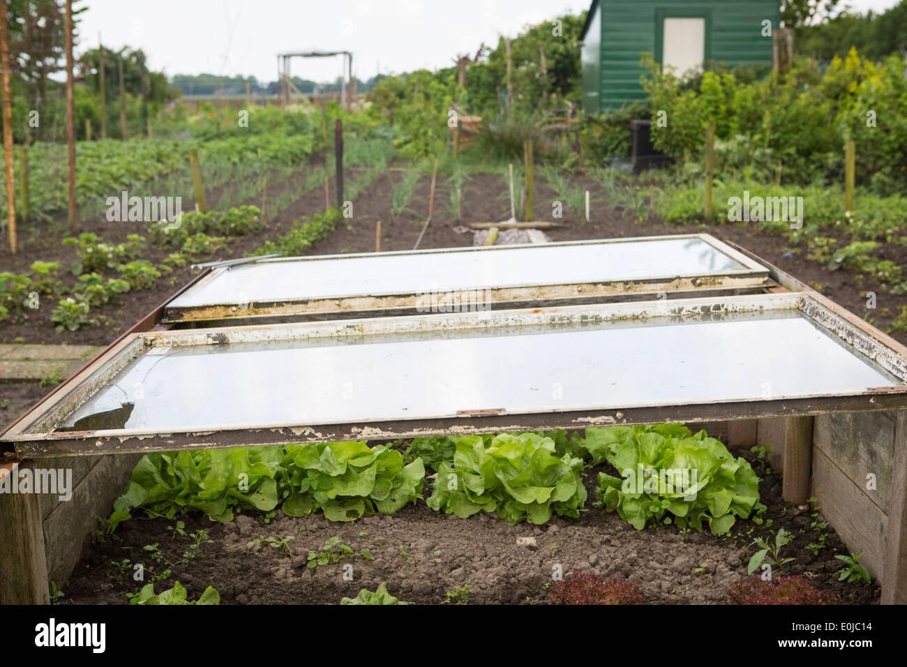 Kleines Gewachshaus Mit Salat Im Schrebergarten Im Fruhjahr