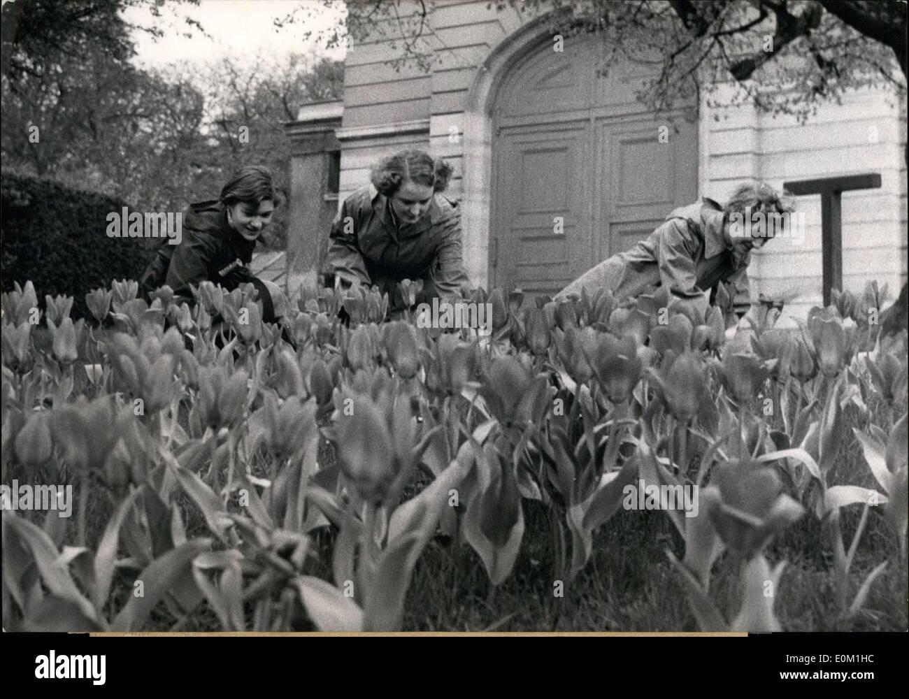 2 April 1953 Wurden Mehr Als 200000 Tulpen Und Narzissen