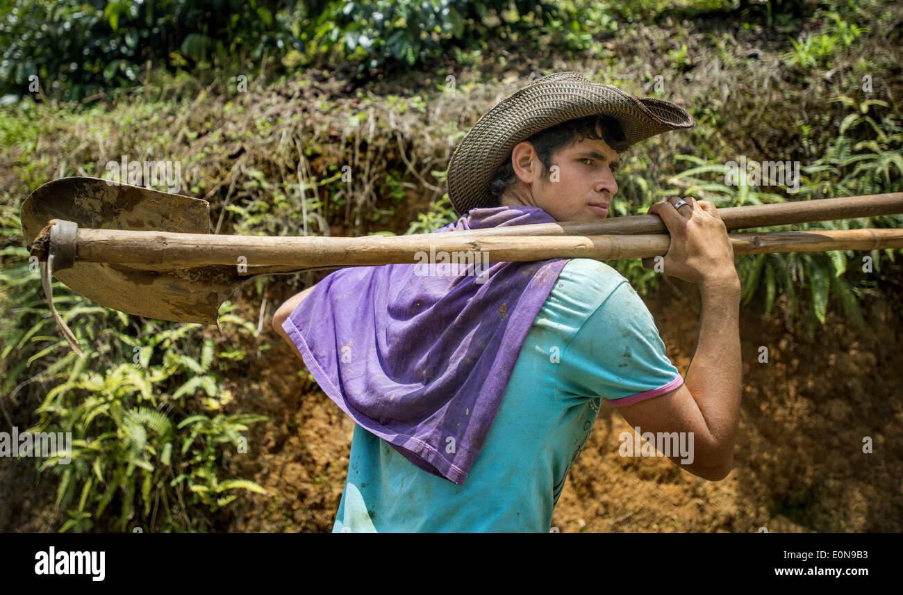 Jardin, Departement Antioquia, Kolumbien. 20. März 2014. 20. März 2014 - ein Kaffee Plantagenarbeiter blickt auf das Tal von Kaffeepflanzen wachsen auf den Hügeln von Jardin im Departement Antioquia Region Colombia.Story Zusammenfassung:. Tief in die grünen Täler der Region Kolumbiens Departement Antioquia ist Fabio Alonso Reyes Cano Kaffee Finca. Finca La Siemeona hat seit Generationen Canos-Familie. Er und zwei Arbeiter auf dem Bauernhof der 5 Hektar Land wie seine Vorfahren von Bean Bohne. Es ist eine Tradition, die inmitten der modernen Anbaumethoden, die schneller ernten schwand hat aber die Stockbild