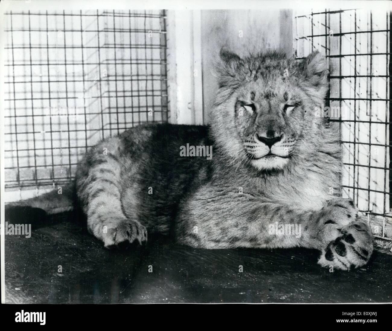 1967 Cat Stockfotos & 1967 Cat Bilder - Alamy